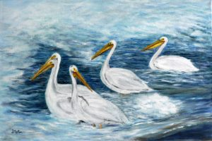 Pelicans, water, saskatoon, weir, Saskatchewan