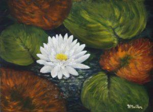 White Water Lily, Annapolis Royal, Annapolis Royal Historic Gardens, garden, white lily