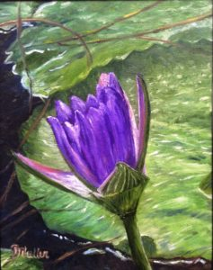 water lily, purple